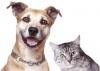 Кошка или собака в доме  Автор: Александр Смирнов