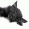 Черная кошка в доме. Приметы  Автор: