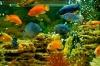 Как завести рыбок в доме?  Автор: Александр Смирнов