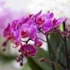 Как ухаживать за орхидеей?  Автор: Рустамов Санжар