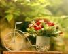 С чего начать домашнее цветоводство?  Автор: Александр Смирнов